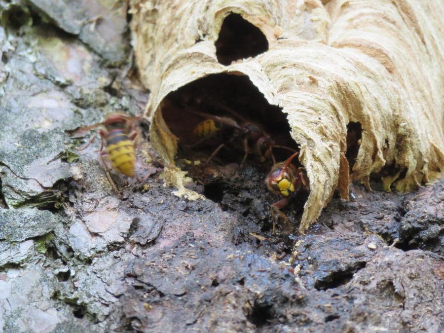 вилючинск осиное гнездо фото штрихом установки натяжного